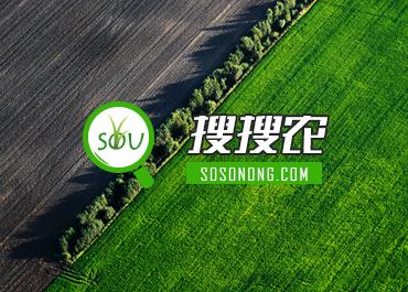 搜搜农农业类网站设计欣赏